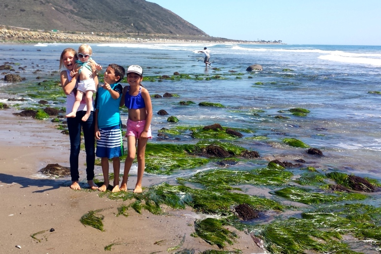 Kiddos introduce Cousin Addy to the tide pools